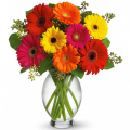 send gerberas flower to cebu, gerberas flower delivery in cebu